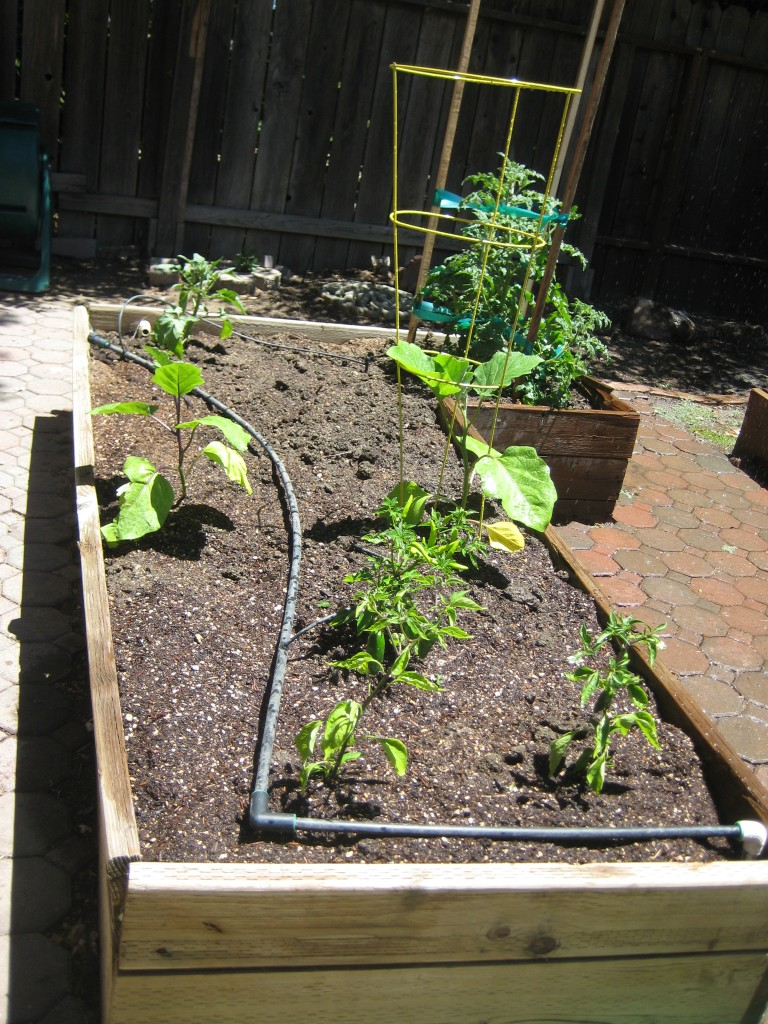 The bed with vegetables planted